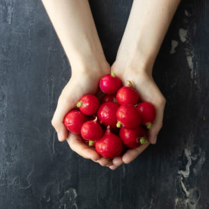 All about radish