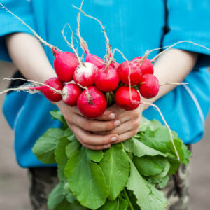 Growing radish for kids